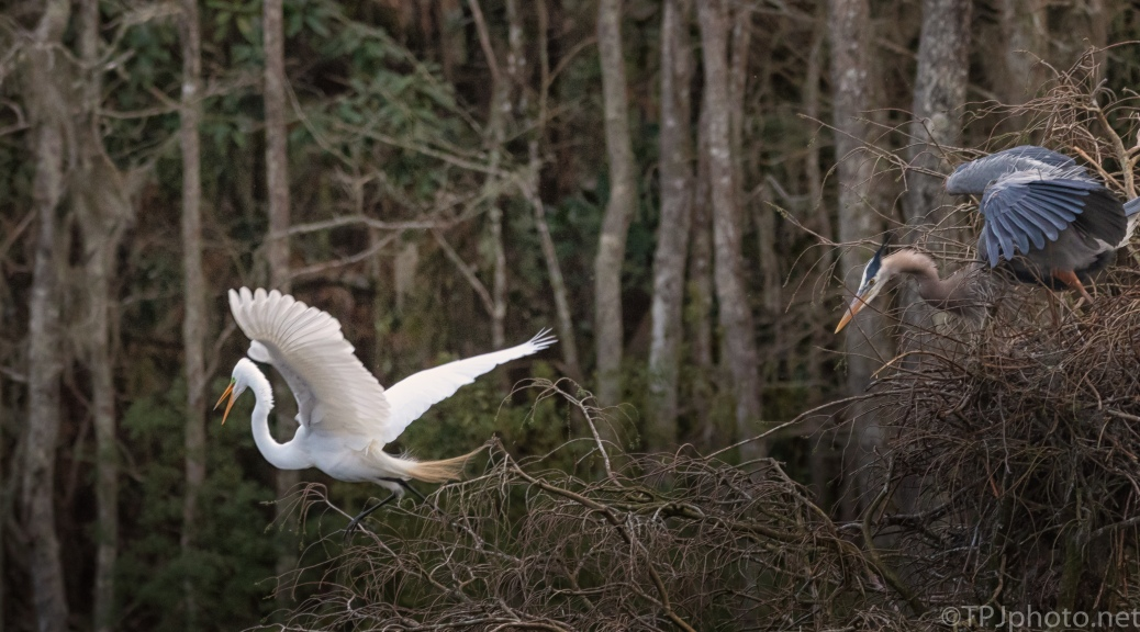 Egret And Heron Disagreement, Again