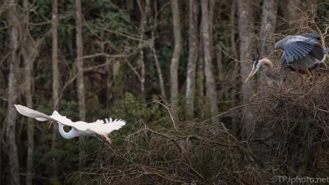 Egret And Heron Disagreement, Again