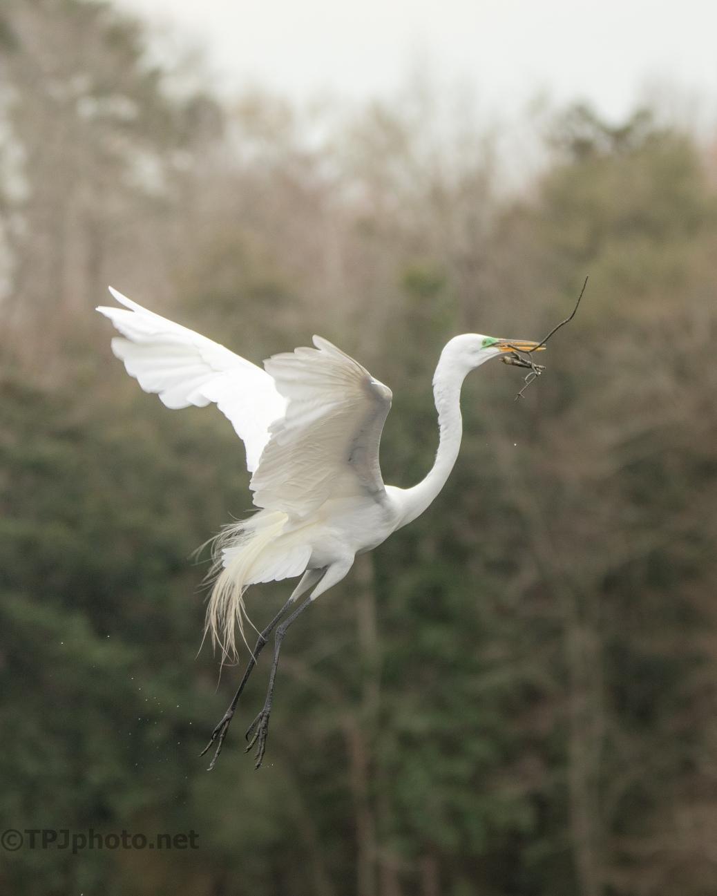 Smooth Entrance, Egret
