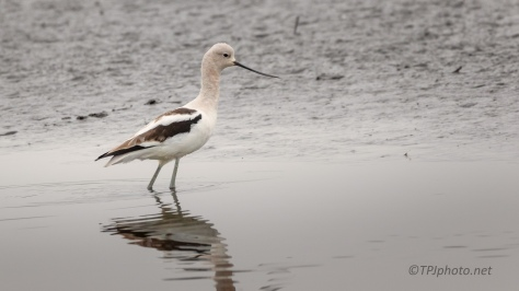 Avocet, All Alone