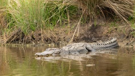 Familiar Faces, Alligator