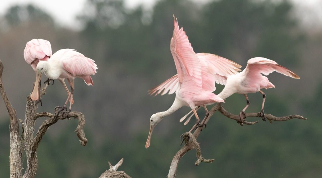No Adult Supervision, Spoonbill (3)