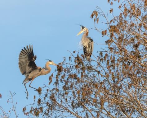New To The Neighborhood, Herons