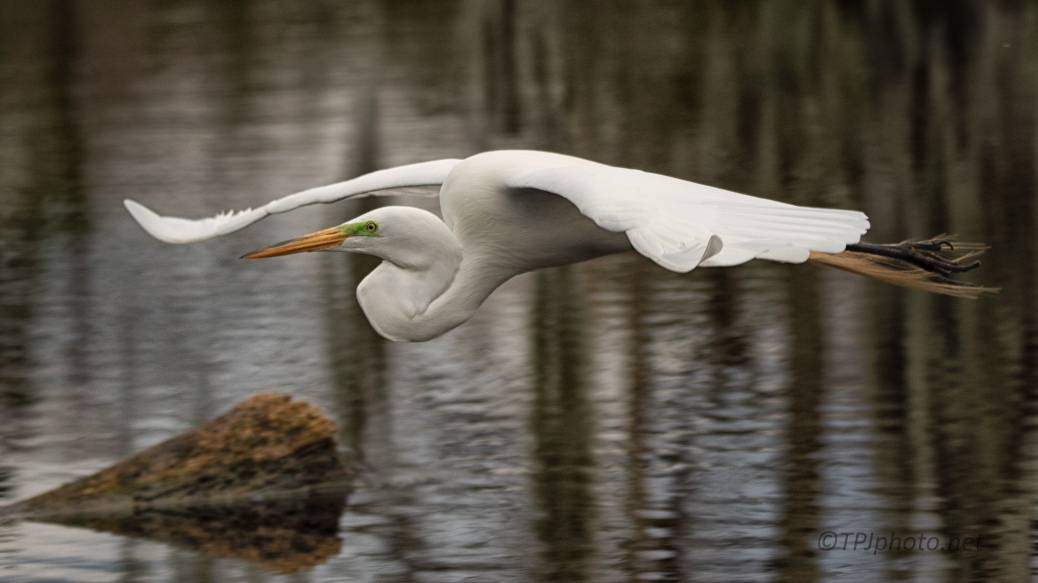 Low And Close, Egret