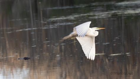 Why I Shoot Wide, Egret