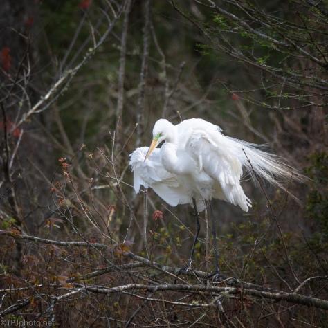 A Little Breeze, Egret