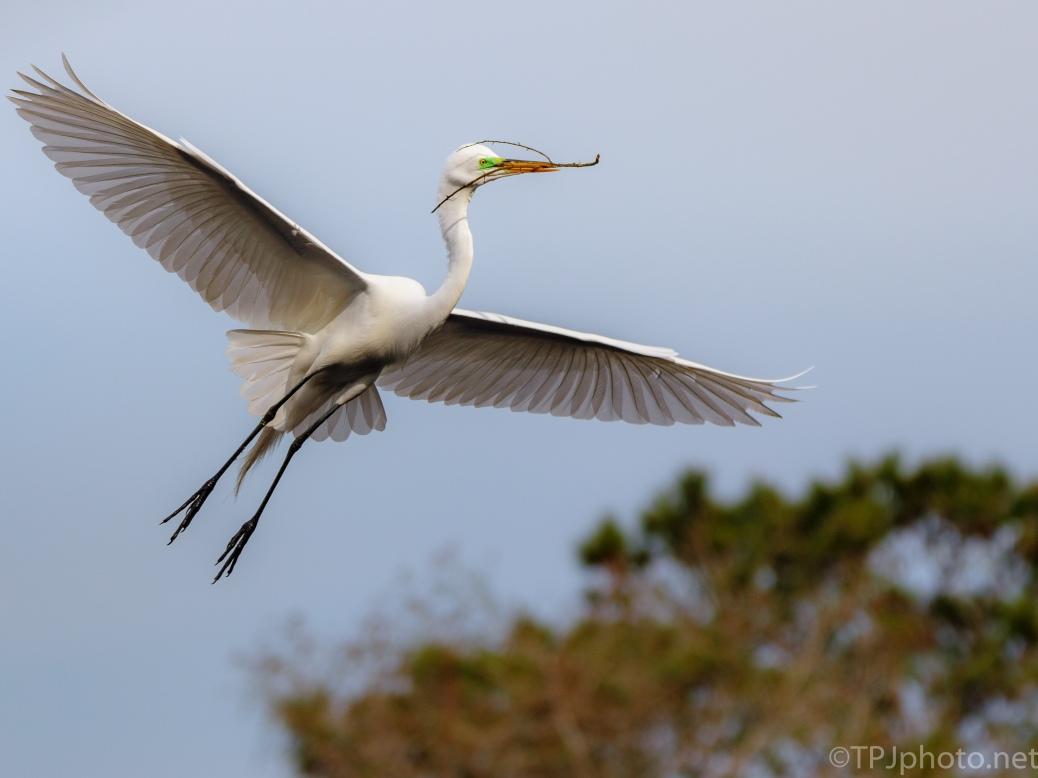 Slow Flight, Egret