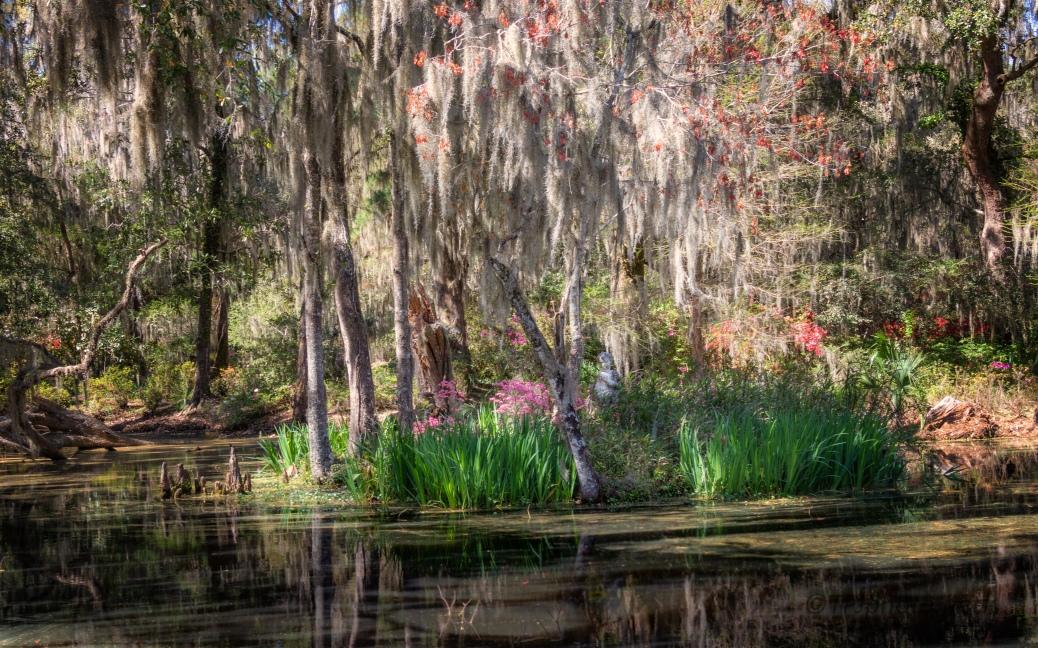 Old Garden Pond