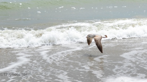 Over The Surf, Gulls