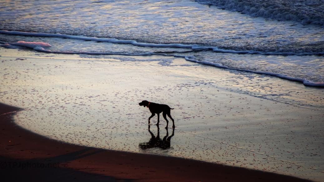 An Early Walk On The Beach