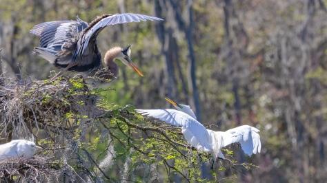 Getting Serious, Heron, Egret