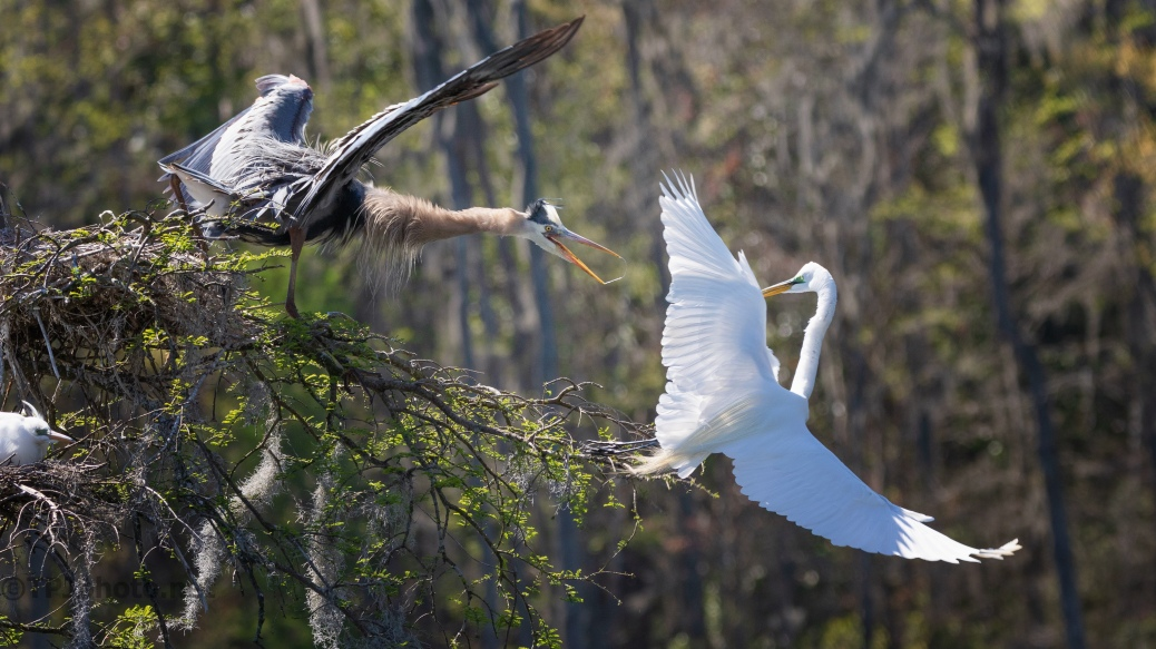 Getting Serious, Heron, Egret