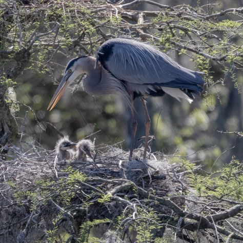 The 'What The Hell Have I Done' Look, Heron