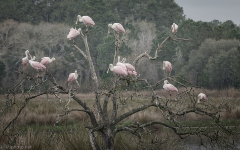 Bowl of Spoonbill In A Marsh