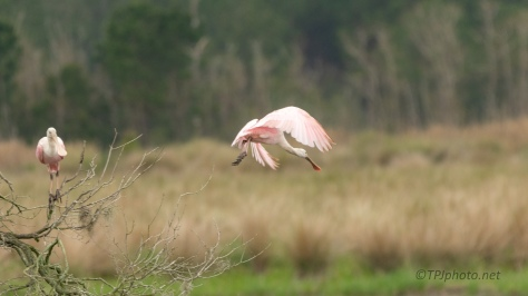 Leaving The Chaos, Spoonbill