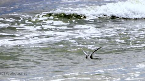 Catching A Tern