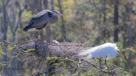 On Going Trouble, Egret, Heron