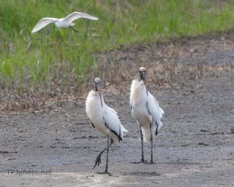 Couple A Storks