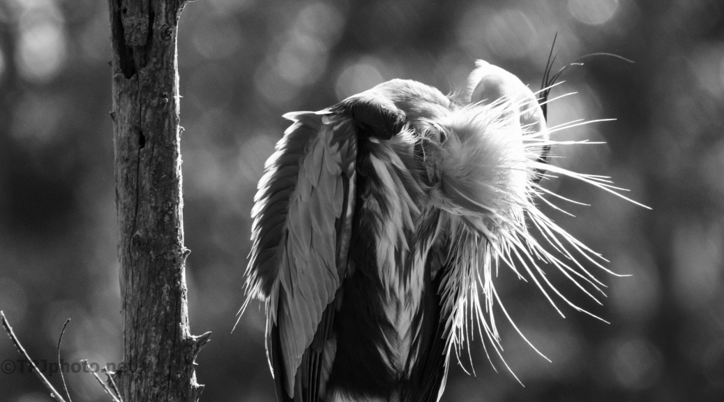 Feathers (2)
