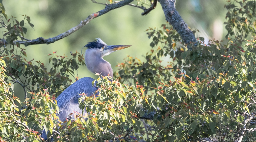 Heron, End Of Day