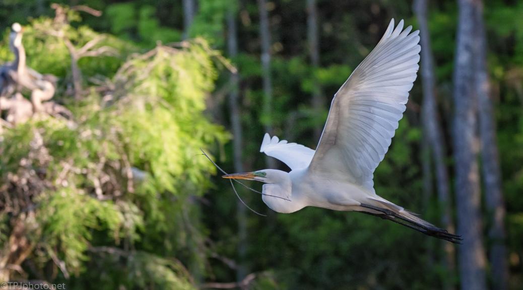 Egret Passing Through Sun Light