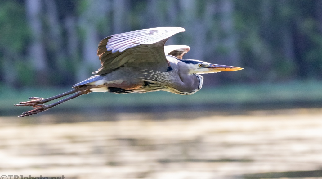 Great Blue, Fast Mover