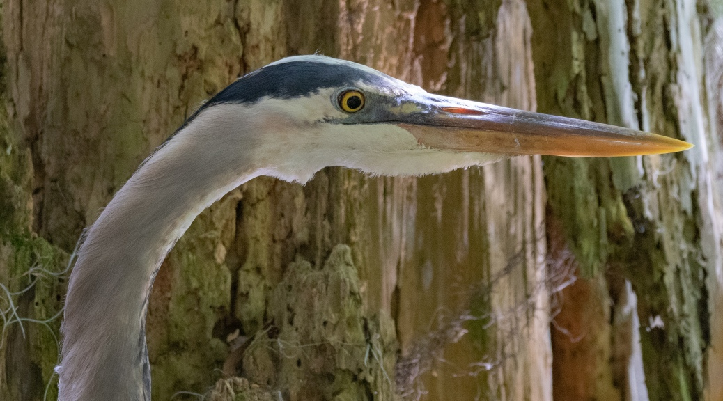 Seeing Eye To Eye, Heron