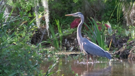 Adding Something Extra To A Pond, Heron