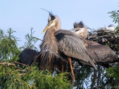 A Family Portrait, Heron