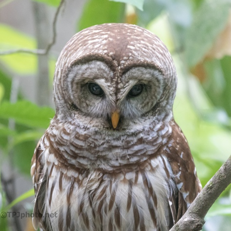 Who Blinks First, Owl