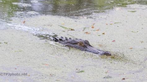 Changing Light, Alligator Joining Us