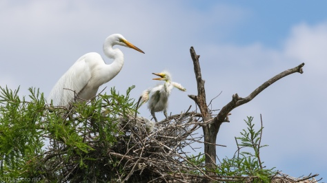 Wants Attention, Egret