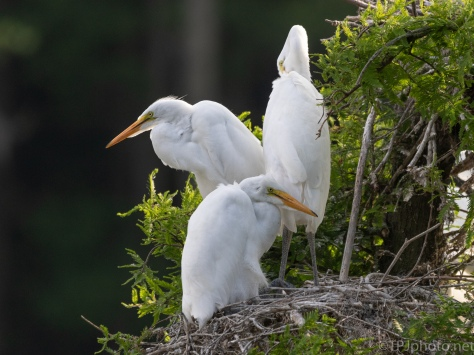 Time To Think About Moving, Egret