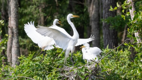 The Whole Family, Egrets