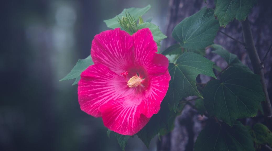 Flower On A Swamp Tree