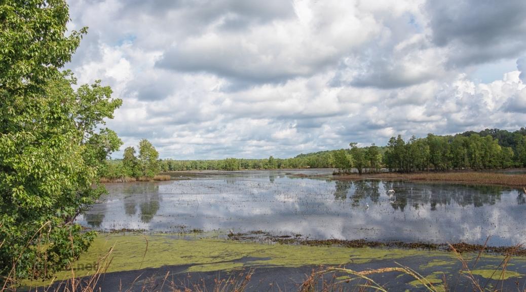 Taken From A Marsh Dike