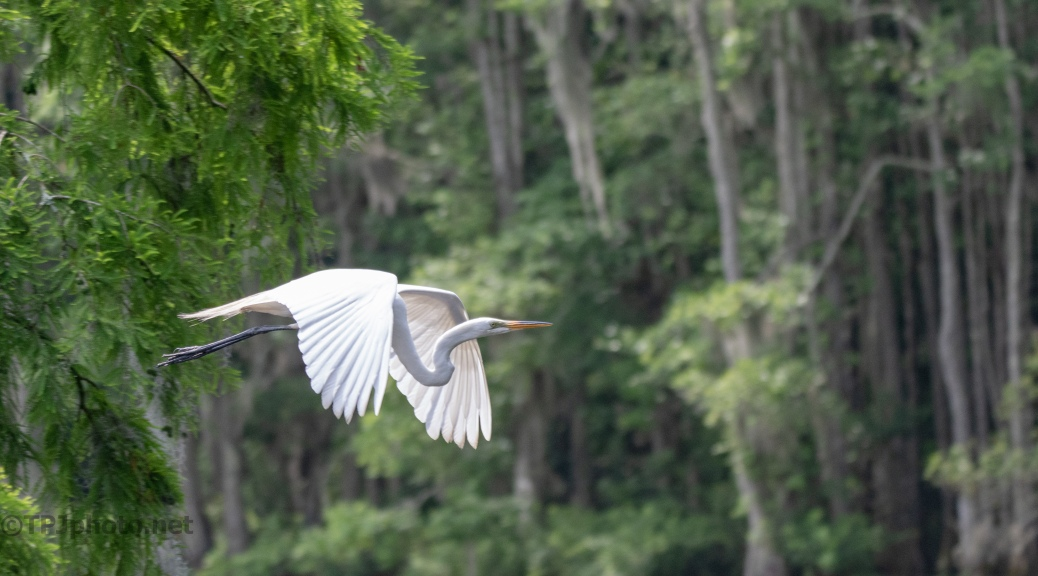 All The Time In The World, Egret