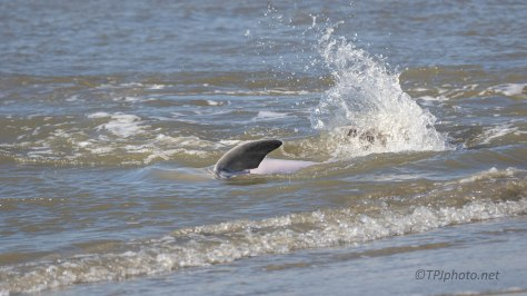 Strand Feeding Dolphins (1)