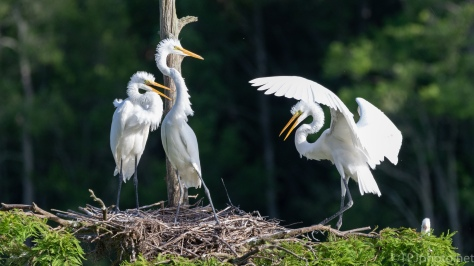 Showing Them He Can Fly, Egret