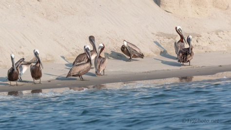 Drifting By, Pelican