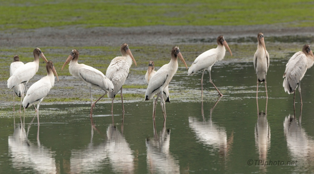 A Few Storks The Other Day