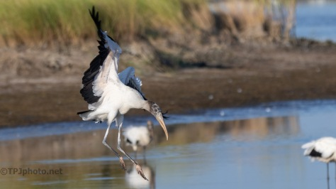 Love The Landings, Wood Storks
