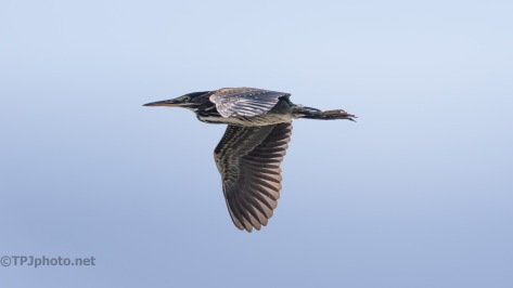 A Flash Of Green, Heron