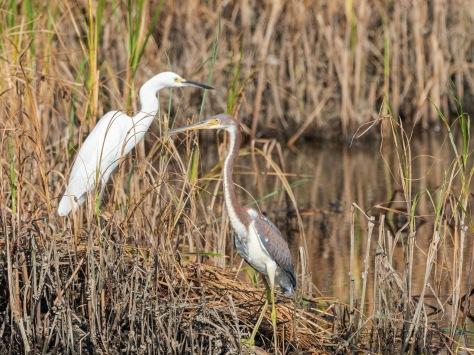 Best Buddies, Heron And Egret