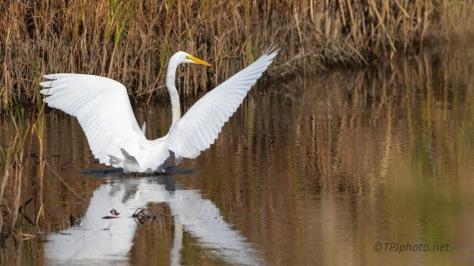 Going Through The Deep Water, Egret