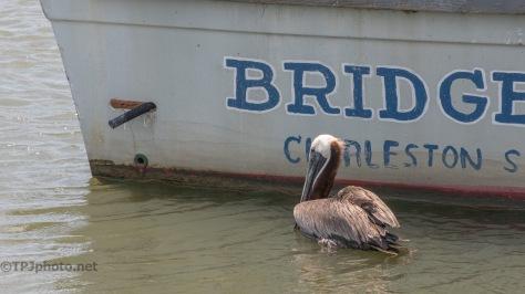 Two Different Methods, Pelican