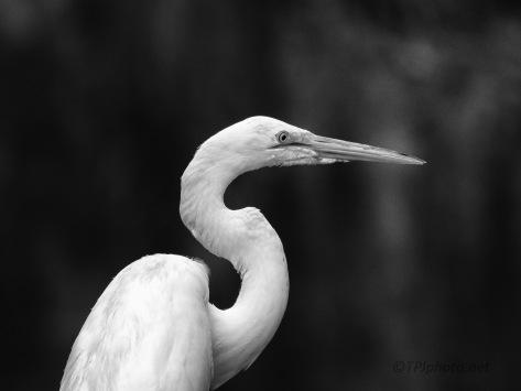Egret As A Model