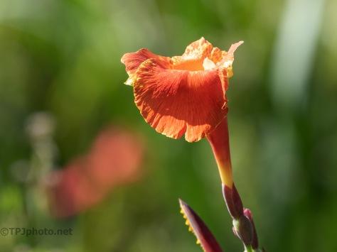 Flower Before The Hurricane