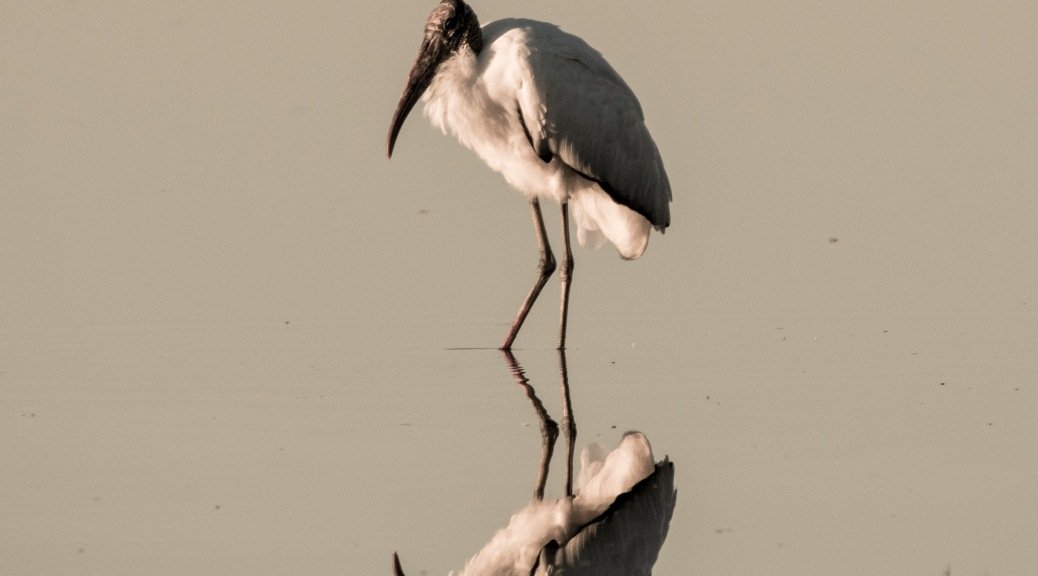 Making The Most Of Glare, Stork