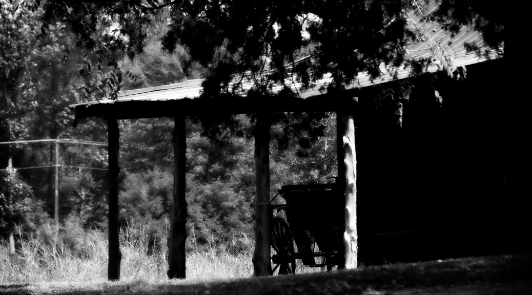 Old Carriage, What I Saw